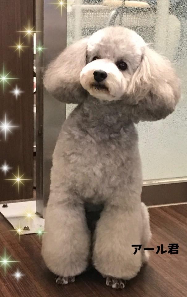 銀色の貴公子 アール君(*☻-☻*)