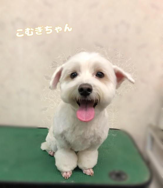 mix犬のこむぎちゃん