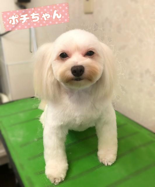 mix犬のポチちゃん