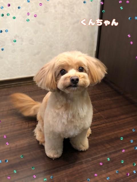 MIX犬のくんちゃん