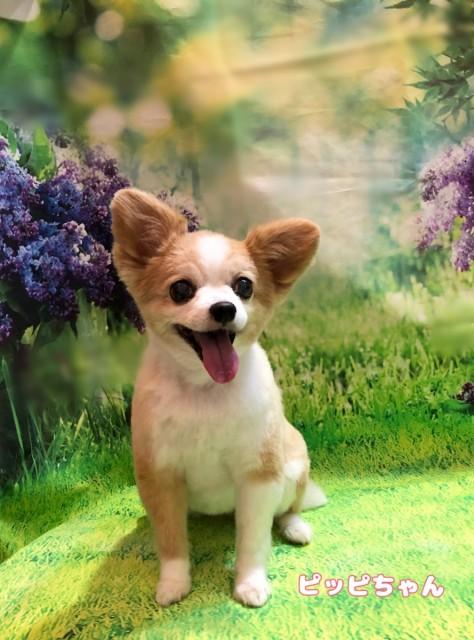 MIX犬のピッピちゃん