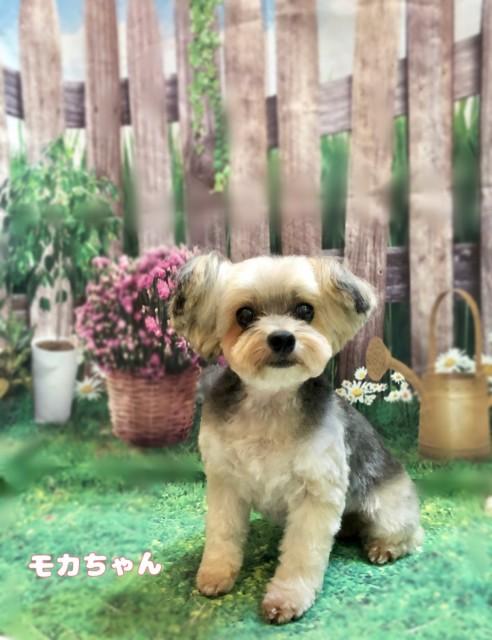 MIX犬のモカちゃん