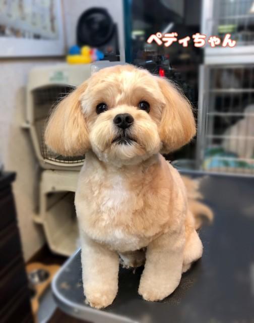 MIX犬のペディちゃん