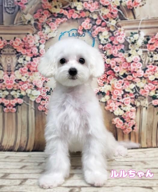 MIX犬のルルちゃん