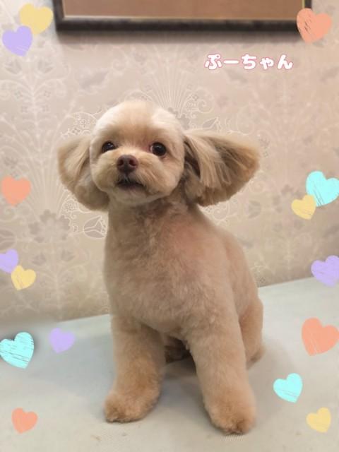 MIX犬のプーちゃん