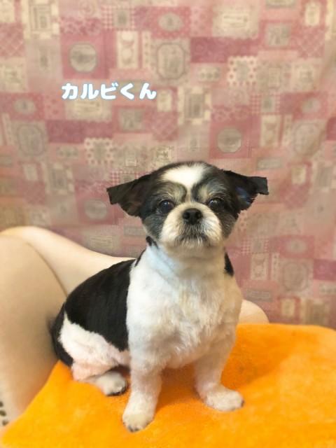 MIX犬のカルビくん