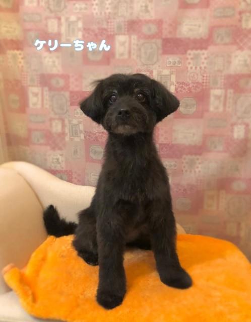 MIX犬のケリーちゃん